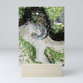 Laguna Beach Nature Walk - Sea Anemone # 2 Mini Art Print