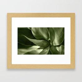 Green Agave Plant Framed Art Print