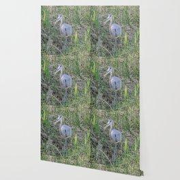 Hello Blue Heron Wallpaper