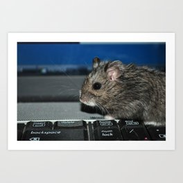 hamster on a keyboard Art Print