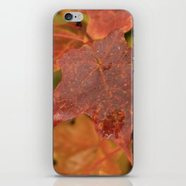 Autumn Maple Leaves iPhone Skin