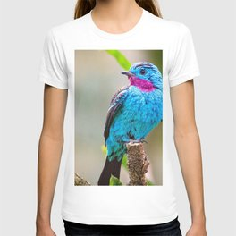 Spectacular Interesting Little Flying Creature Zoom UHD T-shirt
