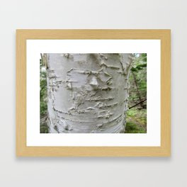 Birch Bark Framed Art Print