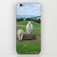 alpaca iPhone & iPod Skins featuring Alpaca by PeteJoey