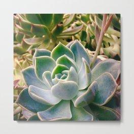 #143Photo #157 #DessertRose #Plants Metal Print