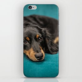 Dachshund iPhone Skin