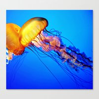 jelly fish Canvas Prints featuring Jelly Fish by Amanda Creek Creative
