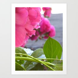 Flowers after the rain Art Print