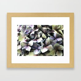 hydrangea flower macro Framed Art Print