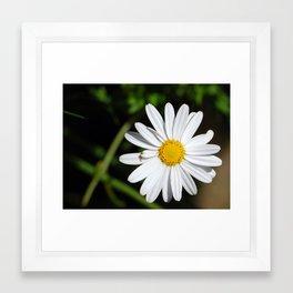 White daisy Framed Art Print