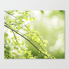 Green Nature Photography, Leaves Tree Branches Photo, Spring Leaf Trees Branch Botanical Canvas Print