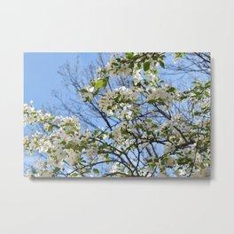 Crabapple Flowers 03 Metal Print