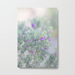 Sage in the desert Metal Print