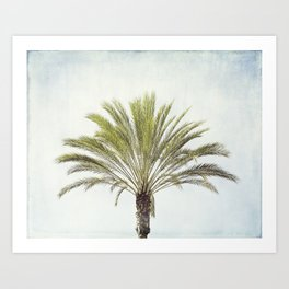 Palm Tree Photography, California Beach Coastal Art, Palm Trees Sky Art Print