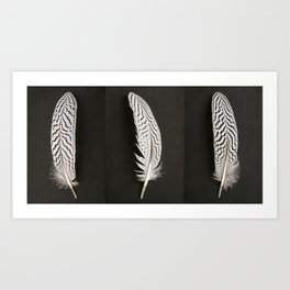 Silver Pheasant Feathers Art Print