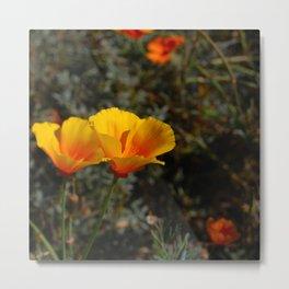 poppies will put you to sleep Metal Print