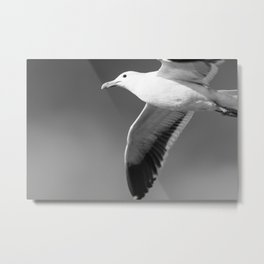 Flying seagull in black and white Metal Print