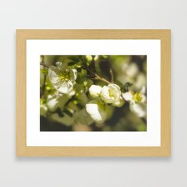 White Quince Framed Art Print