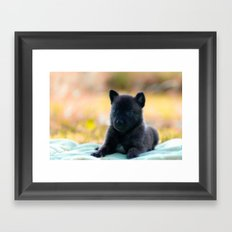 Cuter Herder Shepherd Puppy 4 weeks old Framed Art Print