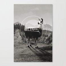 Llama B&W Canvas Print