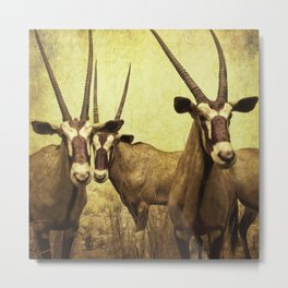 Hi, we are the antelopes. Metal Print