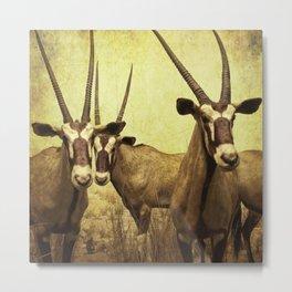 Hi, we are the antelopes. Metal Print