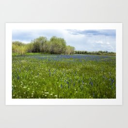 Field of Camas and Dandelions, No. 1 Art Print