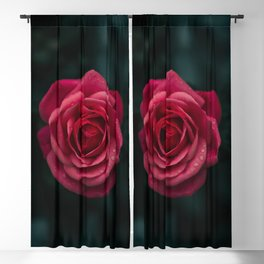 Flower Photography by aaron staes Blackout Curtain