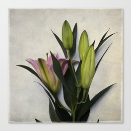 Botanical Lily No. 7826 Canvas Print