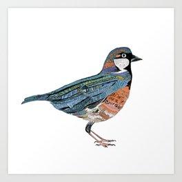 Typographic Sparrow Art Print
