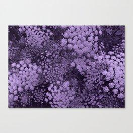 Purple Laceflower Canvas Print