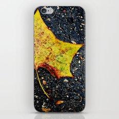 Autumn Leaf iPhone & iPod Skin