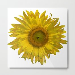 Yellow Sunflower Blossom Metal Print