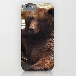 Majestic Large Grown Grizzly Bear Clinging Onto Fleetwood In Lake Ultra HD iPhone Case
