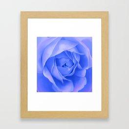 PURPLE ROSE Framed Art Print
