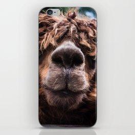 Curious Llama iPhone Skin