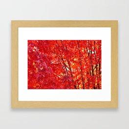 FIERY RED - FALL LEAVES Framed Art Print