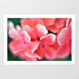 tiny pink flower Art Print