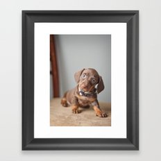 Dachshund Puppy Framed Art Print