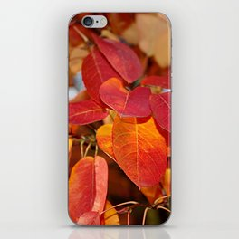 Autumn Glory - Juneberry leaves, Amelanchier iPhone Skin