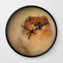 Proud Pomeranian Wall Clock