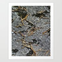 fir needle on a rock Texture Art Print