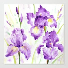 Watercolor Blue Iris Flowers Canvas Print