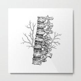 Vertebral column Metal Print