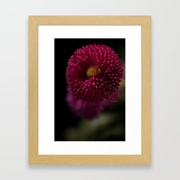Bellis-sima 1 Framed Art Print