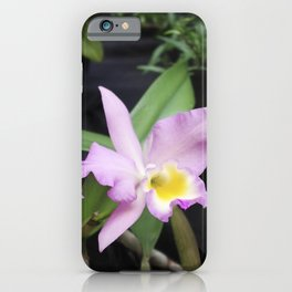 Cattleya Horace Maxima Orchid iPhone Case