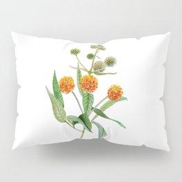 Matico Pillow Sham