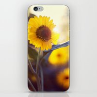 sunflowers iPhone & iPod Skins featuring Sunflowers by elle moss