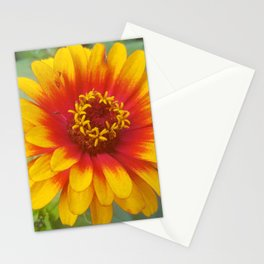 Zinnia on fire Stationery Cards