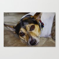 terrier Canvas Prints featuring Terrier by Rick Kirby